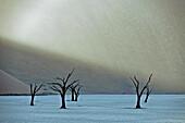 Dead camel thorn trees in Dead Vlei, Namib Desert, Namibia, Africa