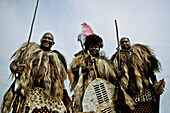 Three men of the Swazi tribe in traditional fur outfits with shields and sticks, Swaziland, Africa