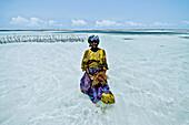 Algae farmer in shallow water, Zanzibar, Tanzania, Africa