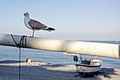 Seagull on a mast at beach, Finale Ligure, Province of Savona, Liguria, Italy