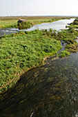 River plain, Narew National Park, Podlaskie Voivodeship, Poland