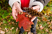 Hands with leaves, acorns and cone, Bialowieza National Park, Podlaskie Voivodeship, Poland