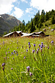 Alpine hut and pasture near Soelden, Tyrol, Austria