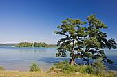 Roseninsel, Feldafing, Starnberger See, Upper Bavaria, Bavaria, Germany