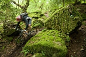 A man speeds past on his mountain bike through a mossy forest in England. (blurred motion), England