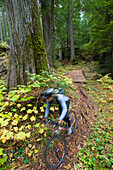 A man is a blur as he mountain bikes the lush, green forest of northern Idaho. (motion blur), Idaho, USA