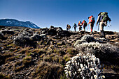 Hikers trek towards Mt. Kilimanjaro mid-morning as the peak lurks in the distance Tanzania