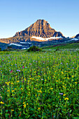 A field of wildflowers grow beneath Reynolds Mountain in Glacier National Park, Montana Glacier National Park, Montana, USA