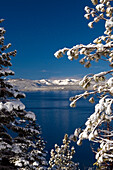 Tree branches with fresh snow frame Lake Tahoe on a clear blue sky day, Nevada Lake Tahoe, Nevada, USA