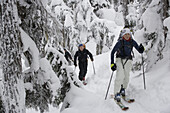 Young adults ski-tour through forest, Rogers Pass, British Columbia, Canada