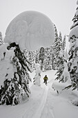 Young woman ski-touring through forest, Rogers Pass, British Columbia, Canada