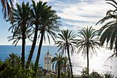 Palmen, Kirchturm im Hintergrund, Bordighera, Provinz Imperia, Ligurien, Italien
