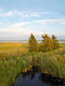 Coastal landscape, Bodden, Zingst, Fischland-Darss-Zingst, Mecklenburg-Vorpommern, Germany