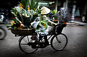 Vietnamese person carrying flowers on bicycle, Hanoi, Vietnam