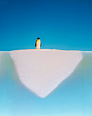 Penguin walking on melting glacier, San Francisco, California, USA