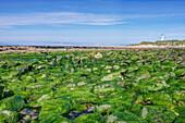 Algae covering rocks at beach, Waipapa, Catlins, New Zealand, Waipapa, Catlins, New Zeland