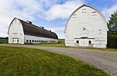 Old barns on farm, Olympia, Washington, United States, Olympia, Washington, USA