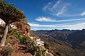 Dragon tree, view from Artenara to Tejeda and Roque Nublo landmark, Gran Canaria, Canary Islands, Spain, Europe