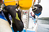 Climbing shoes on a sailing boat, Lim canal, Istria, Croatia