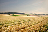 Grain fields, Merklingen, Baden-Wuerttemberg, Germany