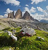 Tre Cime di Lavaredo, Drei Zinnen, Alpenrose, South Tyrol, Dolomites, Italy