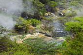 Hot Springs, Waimangu Volcanic Valley, Rotorua, Bay of Plenty, North Island, New Zealand