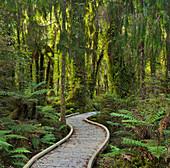 Trail through rain forest, West Coast, South Island, New Zealand