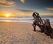 Driftwood on the beach at Ship Creek, West Coast, Tasman Sea, South Island, New Zealand