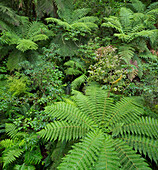 Wood and ferns in Fiordland National Park, Southland, South Island, New Zealand