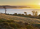 Tahakopa Bay, Papatowai, Catlins, Otago, South Island, New Zealand