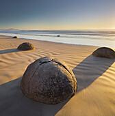 Moeraki Boulders in the morning light, Otago, South Island, New Zealand