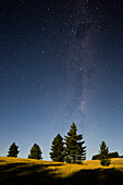 Trees in the moonlight, starry sky, Otago, South Island, New Zealand