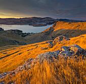 Lyttelton Harbour, Christchurch, Canterbury, South Island, New Zealand