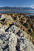 Rock formations, Kaikoura Peninsula, Manakau Mountains, Canterbury, South Island, New Zealand