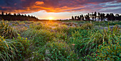 Sunset over a meadow, Manawatu-Wanganui, North Island, New Zealand
