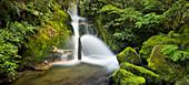Whirinaki Falls, Whirinaki Forest Park, Bay of Plenty, North Island, New Zealand