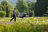 Father pushing pram, flower bed, Doblhoff park, Baden near Vienna, Lower Austria, Austria