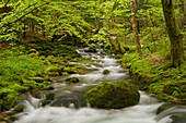 Orbe river, Vallorbe, Waadt, Switzerland