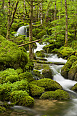 Moss covered stones, Orbe river, Vallorbe, Waadt, Switzerland