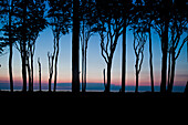 Trees in evening light, Ghost Forest, Gespensterwald, Baltic Sea, Nienhagen, Mecklenburg-Vorpommern, Germany