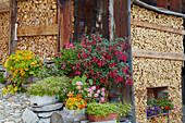 Village idyll with firewood and flowers, Spluegen, Hinterrhein, Rhine, Canton of Grisons, Switzerland, Europe