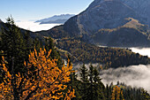 View from mount Jenner over sea of fog, Berchtesgadener Land, Upper Bavaria, Germany