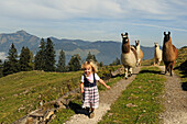 Girl and a herd of llamas, alp Stoibenmoeser, Reit im Winkl, Chiemgau, Bavaria, Germany
