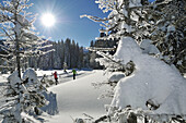 Cross-country skiers, Reit im Winkl, Chiemgau, Bavaria, Germany