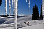 Cross-country skiers, Reit im Winkl, Chiemgau, Bavaria, Germany