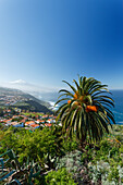 View from El Sauzal to Teide, 3718m, with snow, the island´s landmark, highest point in Spain, palm tree, volcanic mountain, coastline, Atlantic ocean, Tenerife, Canary Islands, Spain, Europe