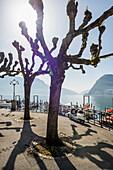 Seeufer in Lugano, Luganer See, Lago di Lugano, Kanton Tessin, Schweiz