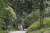 Abbey Garden, Tresco, Isles of Scilly, Cornwall, England, Grossbritannien