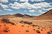 Red sand dunes and vegetation in the Tiras Mountain Range, Namib Naukluft National Park, Namibia, Africa