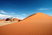 Dünenkamm der Düne 45, orangener Sand und blauer Himmel, bei Sossusvlei, Namib Naukluft Park, Namibia, Namib Wüste, Afrika